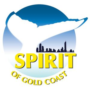 Spirit of Gold Coast Whale Watching - Accommodation QLD