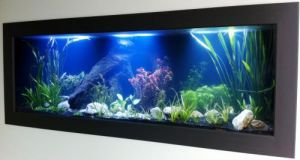 Aquariums in Cairns - Accommodation QLD
