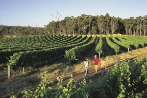 Margaret River Caves Wine and Cape Leeuwin Lighthouse Tour from Perth - Accommodation QLD