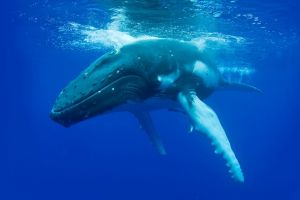 Dunsborough Whale Watching Eco Tour - Accommodation QLD