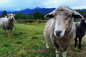 Trevena Glen Farm Animal Experience - Accommodation QLD