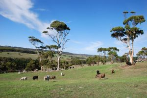 Lisieux Farm Bed and Breakfast - Accommodation QLD